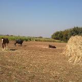 Maher-Farming-04.jpg