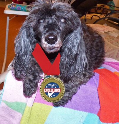 Skruffy and her Award of Excellence (photoshopped into picture)