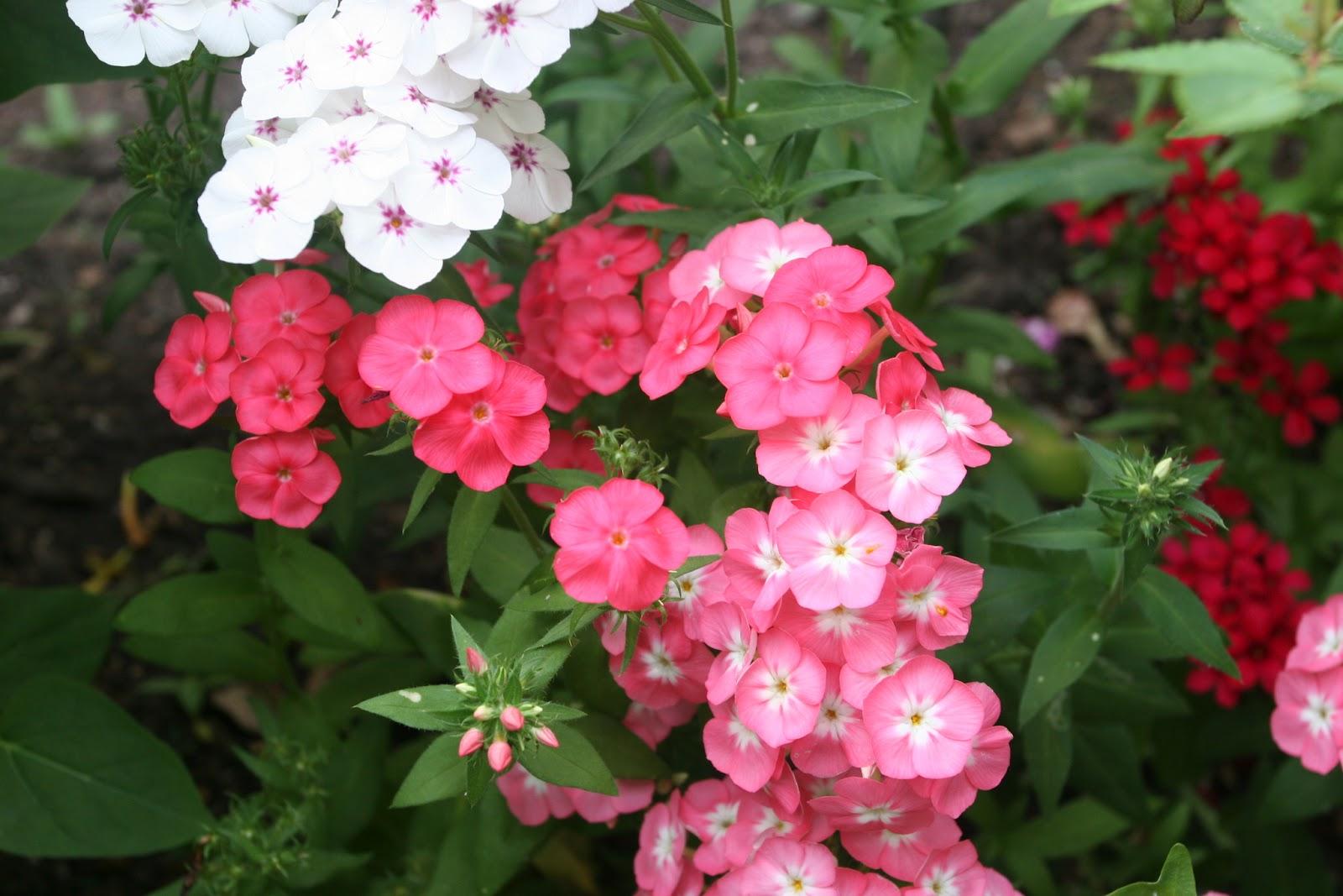 Gardening 2012 - IMG_3278.JPG