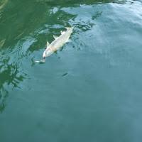 One last fish