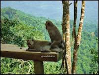 http://www.lomboksociety.web.id/2018/01/fakta-fakta-tentang-wisata-pusuk-monkey.html