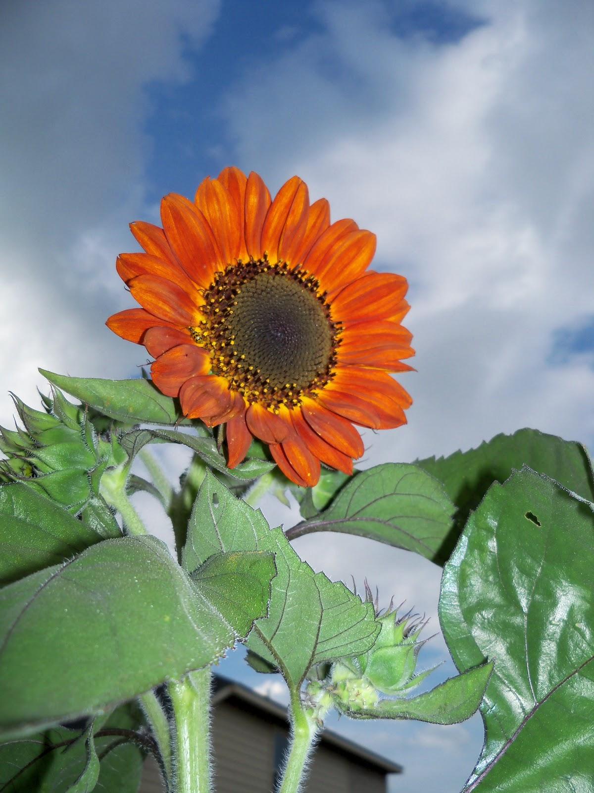 Gardening 2010, Part Three - 101_3582.JPG