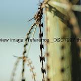 _DSC7997.thumb.jpg