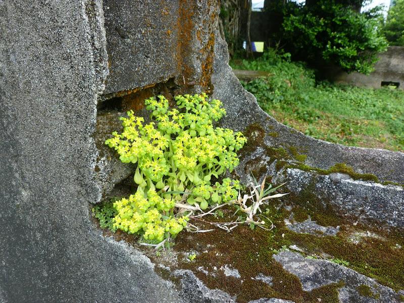 TAIWAN Ile de Lanyu - P1010469.JPG