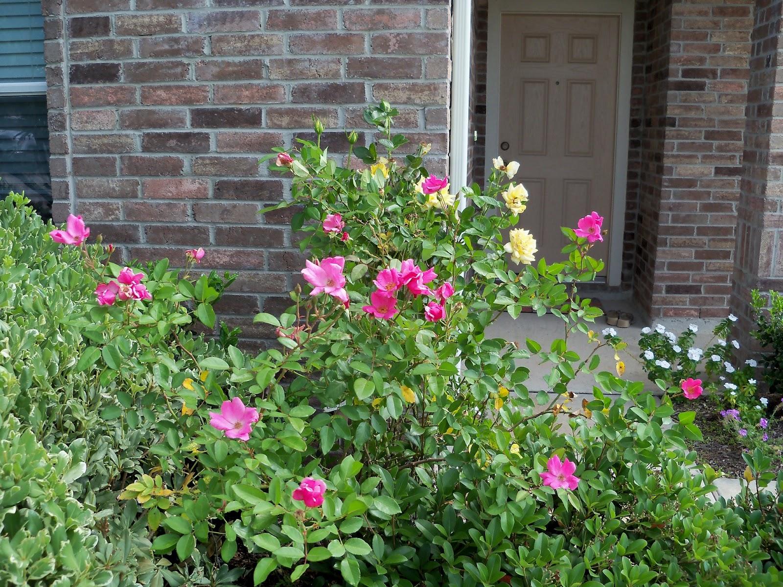Gardening 2012 - 115_1706.JPG