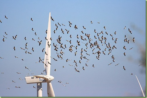 windmills birds2
