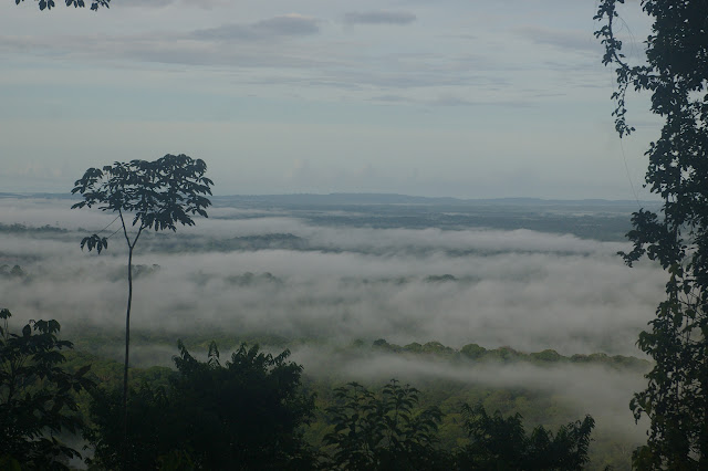 Point de vue vers le sud-ouest depuis la D6 et la Montagne de Kaw. 19 novembre 2011. Photo : J.-M. Gayman