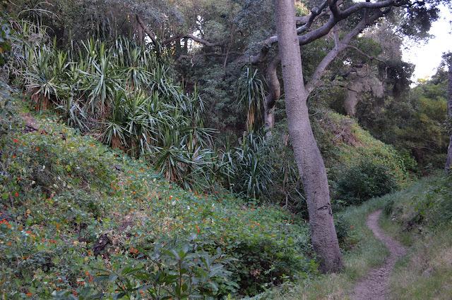 garden escapees along the trail