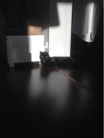 The Daily Cat Morning Light