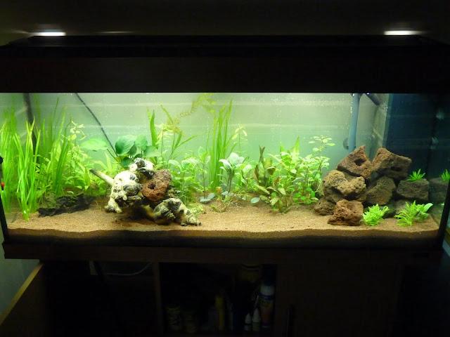 Ma petit histoire Aquariophile de 2009 à aujourd'hui  P1020588