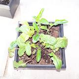 Gardening 2010 - 101_0250.JPG
