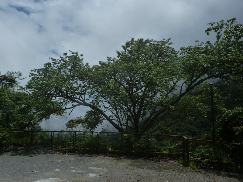 TAIWAN. Weekend Randonnée, Taipei à  Hehuanshan en passant par Puli, retour par les gorges de Taroko - P1280987.JPG