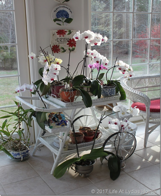 tea cart of orchids