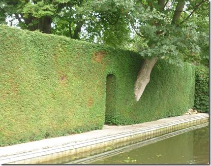 1 good hedge in m harborough
