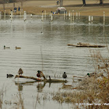 01-26-13 White Rock Lake - IMGP4350.JPG