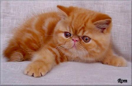 Jenis Jenis Kucing Yang Bagus Untuk Di Pelihara Sumber Informasi