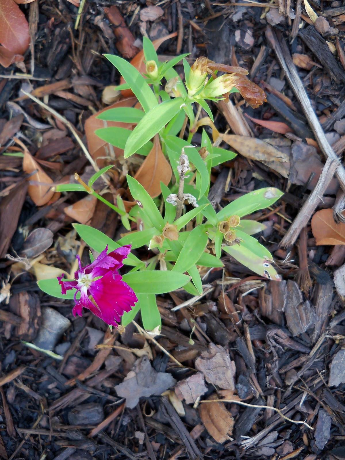 Gardening 2010, Part Two - 101_2321.JPG
