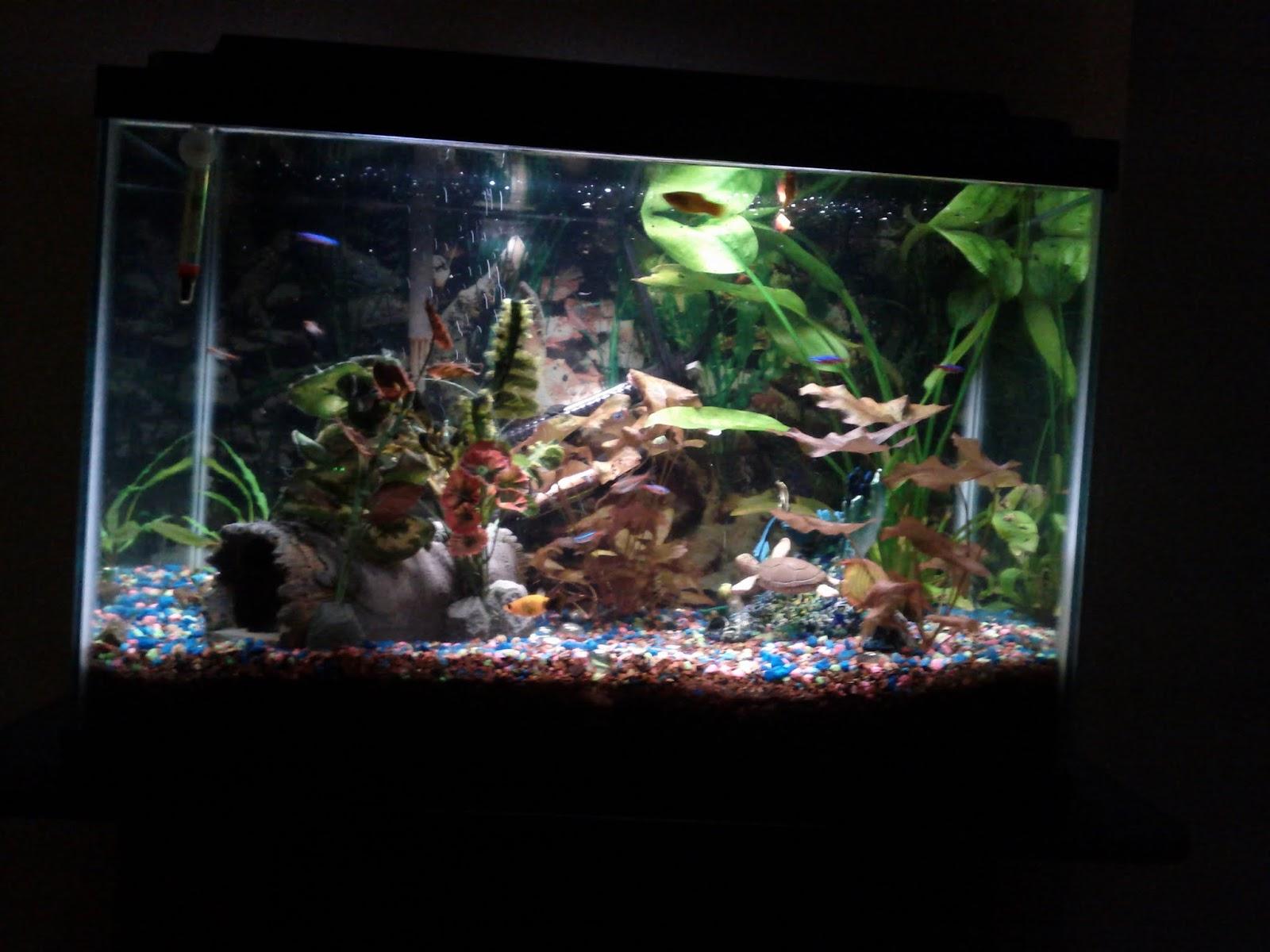 Fish - IMG_20121002_215757.jpg