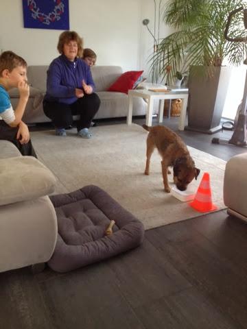 Border Terrier Charly im Ziel - Futter zur Belohnung