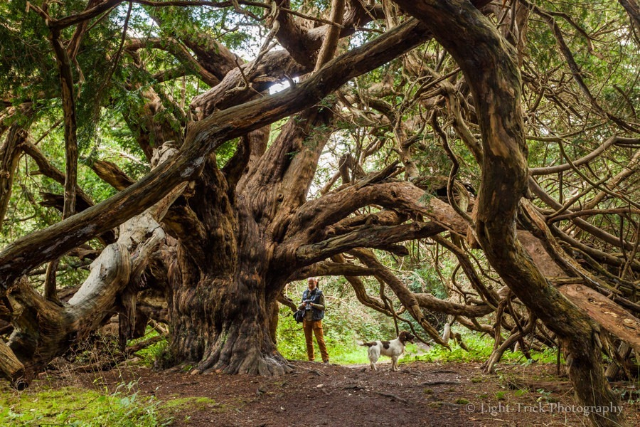 kingley-vale-yew-forest-5