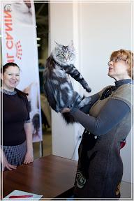cats-show-25-03-2012-fife-spb-www.coonplanet.ru-006.jpg
