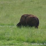 05-11-12 Wildlife Prairie State Park IL - IMGP1586.JPG