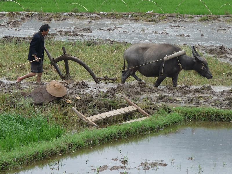 Chine .Yunnan,Menglian ,Tenchong, He shun, Chongning B - Picture%2B796.jpg