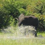 Botswana Moremi