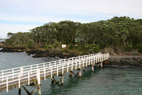 Seagulls on the dock at Rangitoto Island