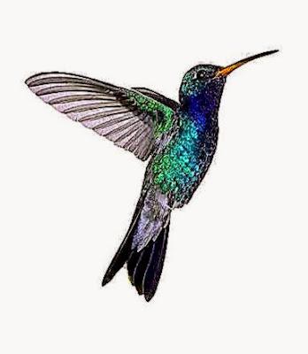 small hummingbird tattoos   Bing Images  Tattoo  Pinterest