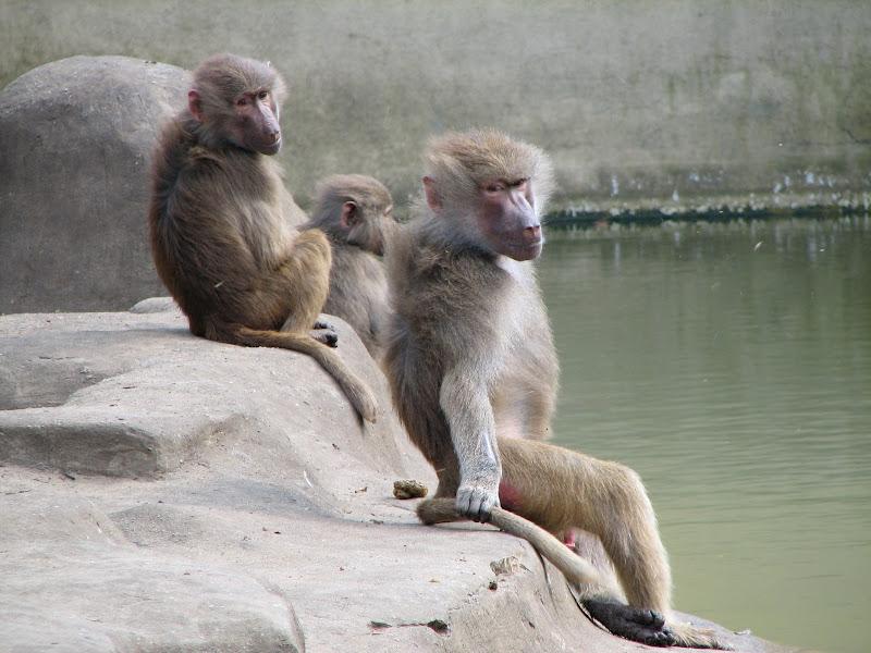 Warszawskie zoo - img_6274.jpg