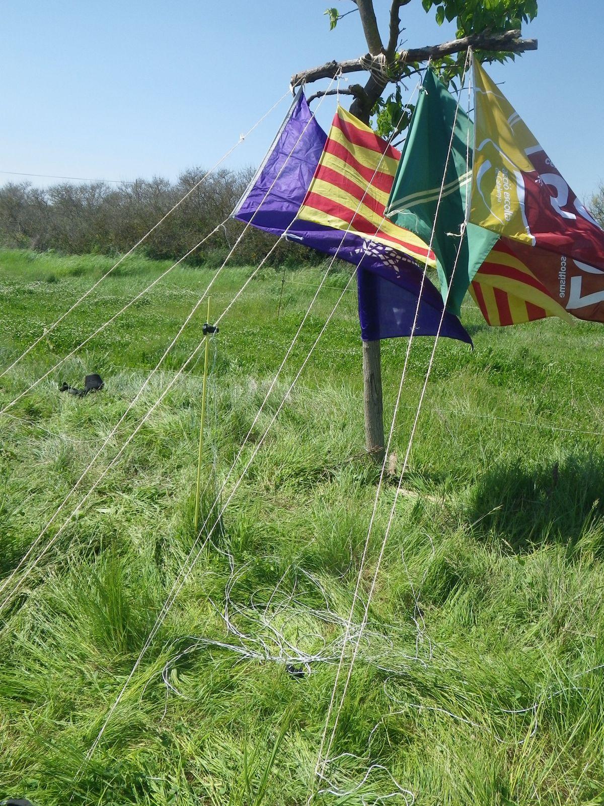Campaments de Primavera de tot lAgrupament 2011 - IMGP0540.JPG