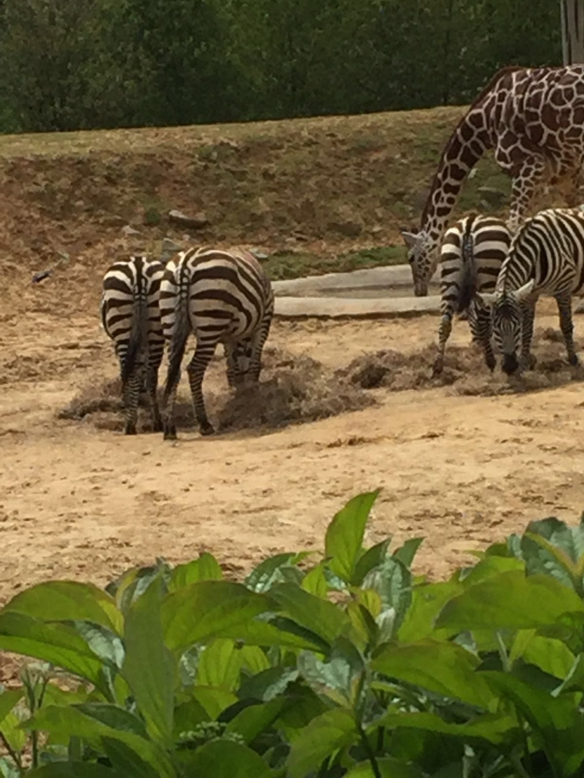 Colchester Zoo - 2016