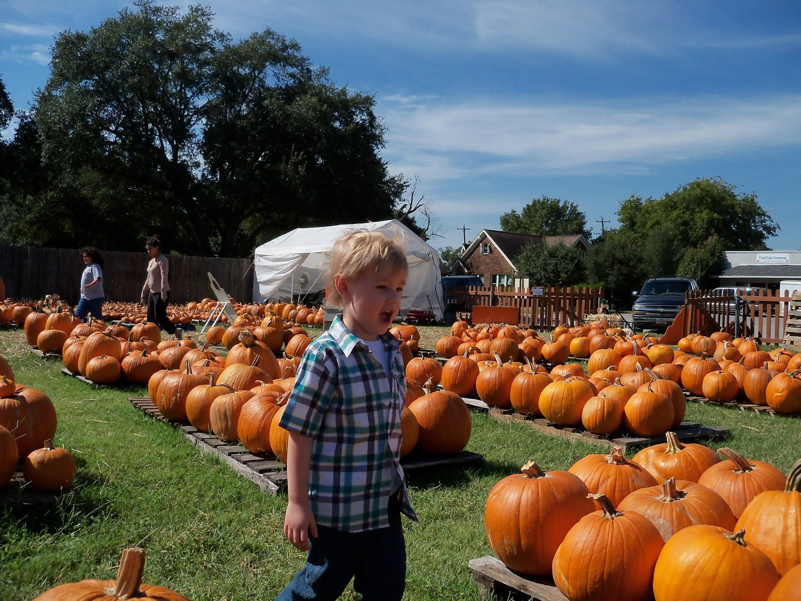 Pumpkin Patch 2015 - 100_0414.JPG