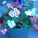 Gardening 2013 - IMG_20130318_163001.jpg