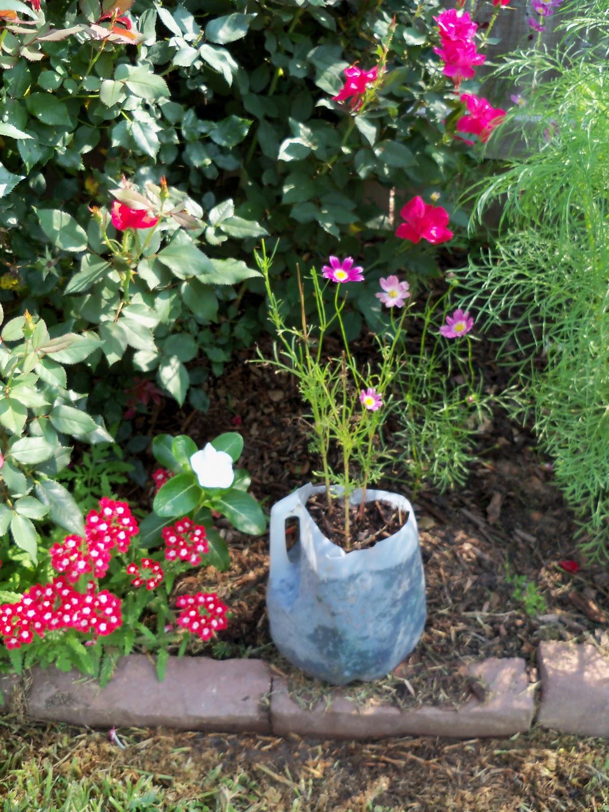Gardening 2010, Part Two - 101_3387.JPG