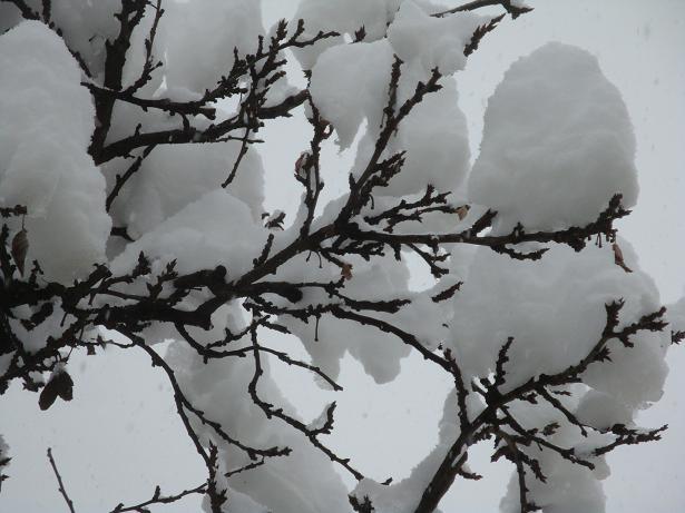 шапки снега