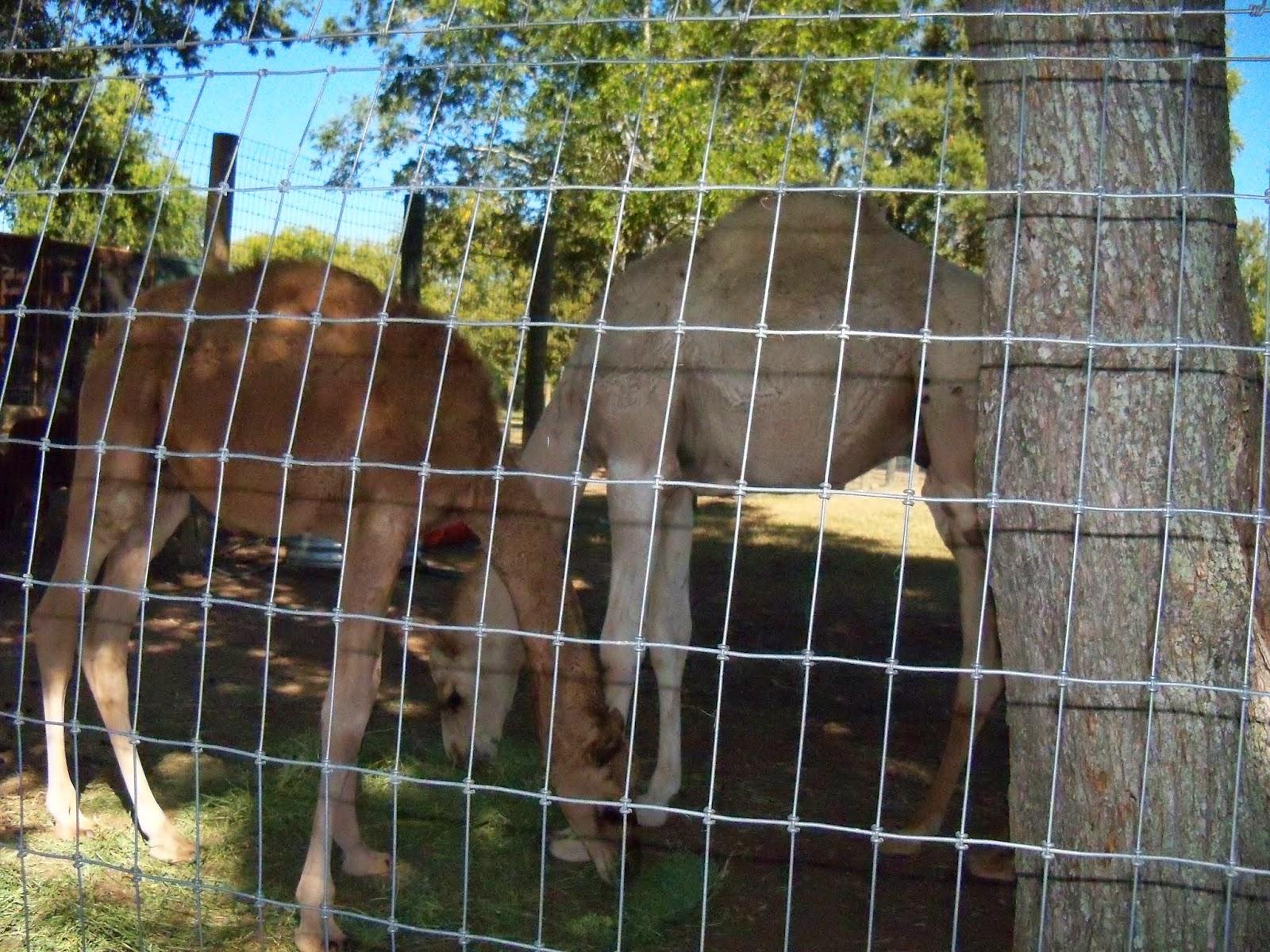 Blessington Farms - 116_4989.JPG