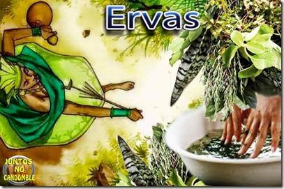 ossain ervas - ewe - folhas - plantas - arvores - raiz - orixá - africa - olossain - culto - candomblé - umbanda - exu e pomba gira