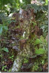 Tree barnacles