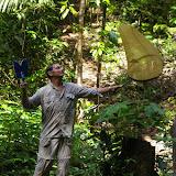 Capture d'un Morpho menelaus sur la piste de la Roche-bateau, Saül (Guyane). 1er décembre 2011. Photo : J.-M. Gayman