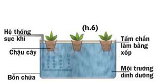Các cách trồng rau thủy canh - 56874bc37528b