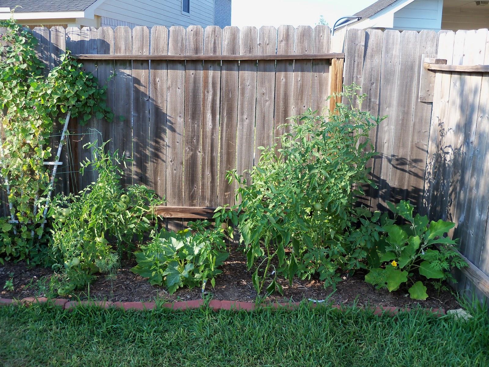 Gardening 2011 - 100_9210.JPG