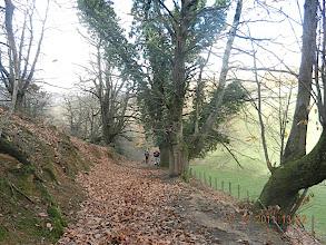 Photo: On a retrouvé ce chemin abandonné à nouveau balisé jaune. Les châtaigniers valent ceux de Corse par leur circonférence