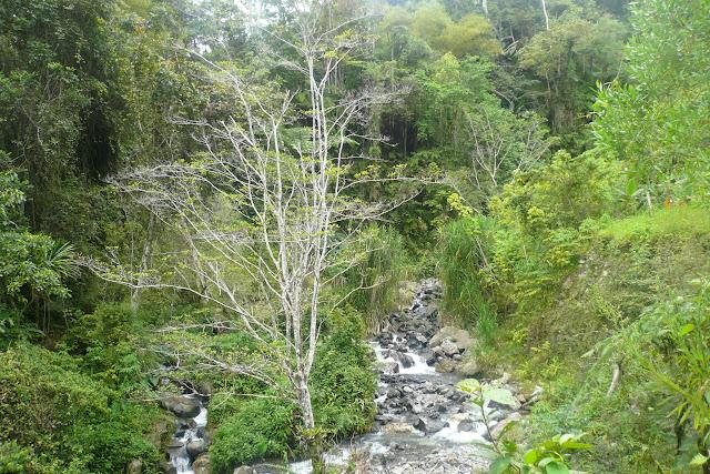 Le ruisseau à Mokwam, refuge de Delias ladas levis. Arfak, août 2007. Photo : Jacques Marquet