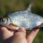 20140906_Fishing_Lysyn_031.jpg