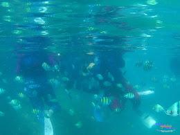 pulau harapan, 29-30 agustus 2015 SJCam 03