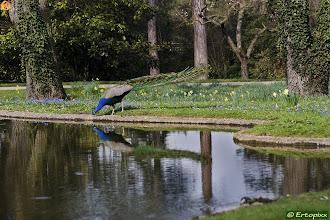 Photo: Bois de Boulogne, jardin Bagatelle ♦ Lasek Buloński, ogród Bagatela - 22.03.2012