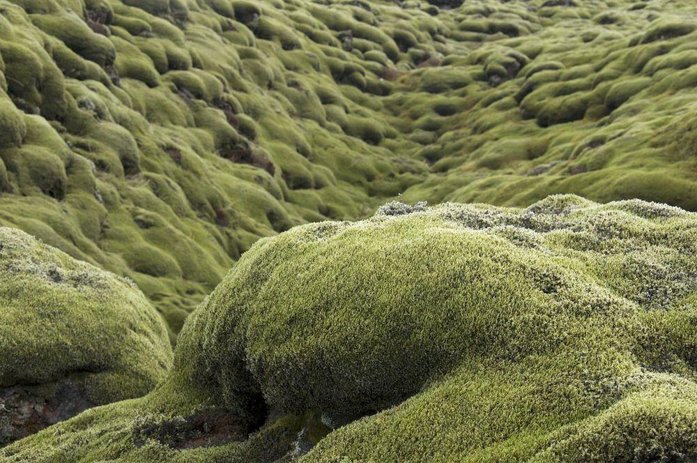 mossy-lava-fields-iceland-8