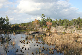 Marsh in the Canadian Shield
